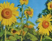 "Sunflowers - From the ""On The Farm"" Book"